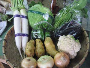 向陽の里の季節の野菜