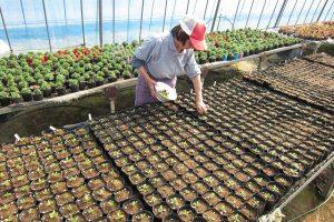 向陽の里の季節の野菜・花苗